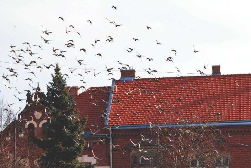 Beskid Średni, fot.Kasia Górecka / Kurs Przewodników Beskidzkich SKPG Kraków 2014/2016